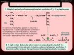 the urea cycle is regulated in two ways