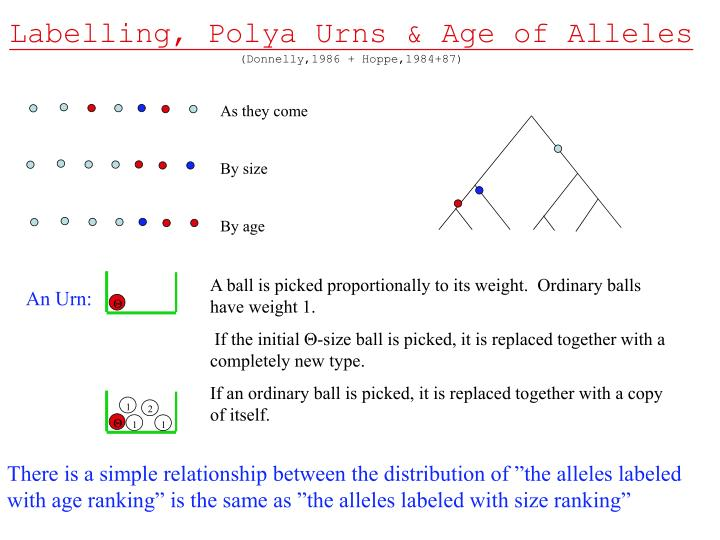 Labelling, Polya Urns & Age of Alleles