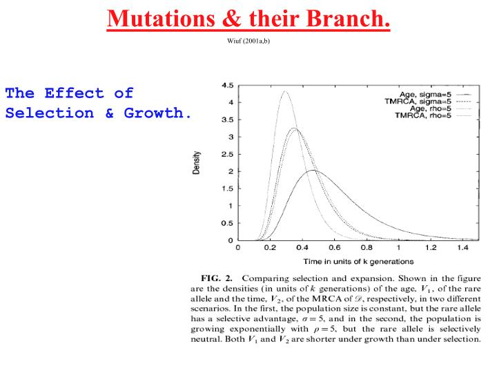 Mutations & their Branch.