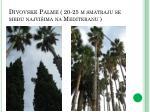 divovske palme 20 25 m smatraju se me u najvi ima na mediteranu