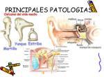 principales patologias6