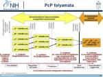 pcp folyamata