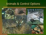 animals control options