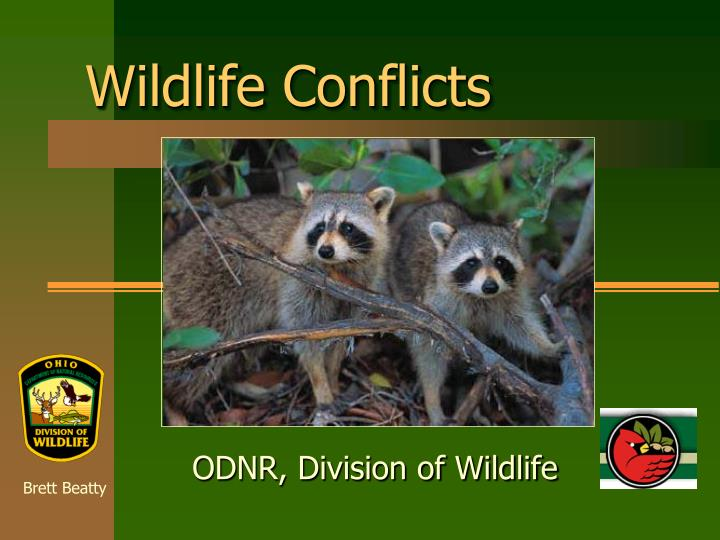 wildlife conflicts n.
