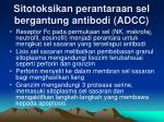 sitotoksikan perantaraan sel bergantung antibodi adcc
