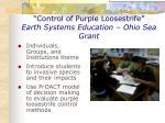 control of purple loosestrife earth systems education ohio sea grant