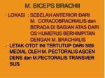 m biceps brachii