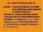 m coracobrachialis