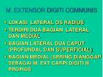 m extensor digiti communis