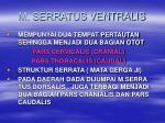 m serratus ventralis
