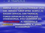 m trapezius