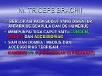 m triceps brachii