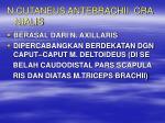 n cutaneus antebrachii cra nialis
