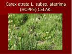 carex atrata l subsp aterrima hoppe celak