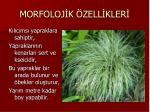 morfoloj k zell kler