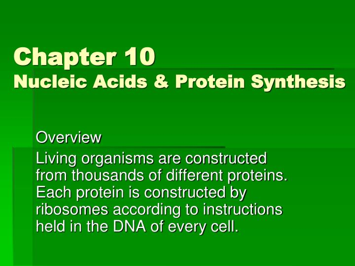 chapter 10 nucleic acids protein synthesis n.