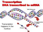 transcription dna transcribed to mrna