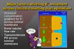 major factors affecting k movement across cortical collecting duct epithelium