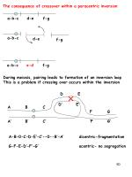 the consequence of crossover within a paracentric inversion