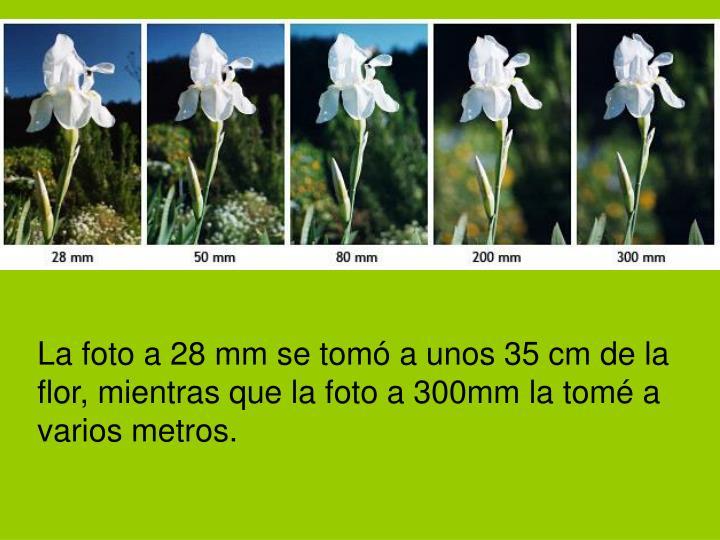 La foto a 28 mm se tomó a unos 35 cm de la flor, mientras que la foto a 300mm la tomé a varios metros.