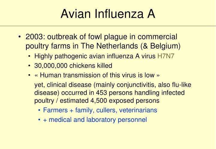 Avian Influenza A