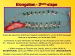 elongation 2 ieme etape