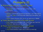 phylogeny 2