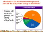 november is the main termite fishing season how will the chimp s diet change in november