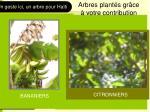 arbres plant s gr ce votre contribution