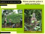 arbres plant s gr ce votre contribution1