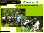 distribution et plantation des plantules
