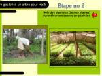 soin des plantules jeunes plantes durant leur croissance en p pini re