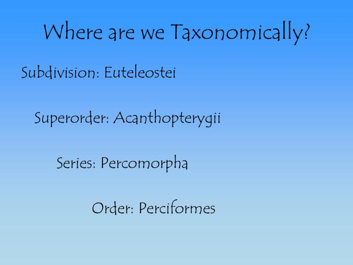where are we taxonomically n.