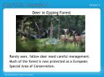deer in epping forest