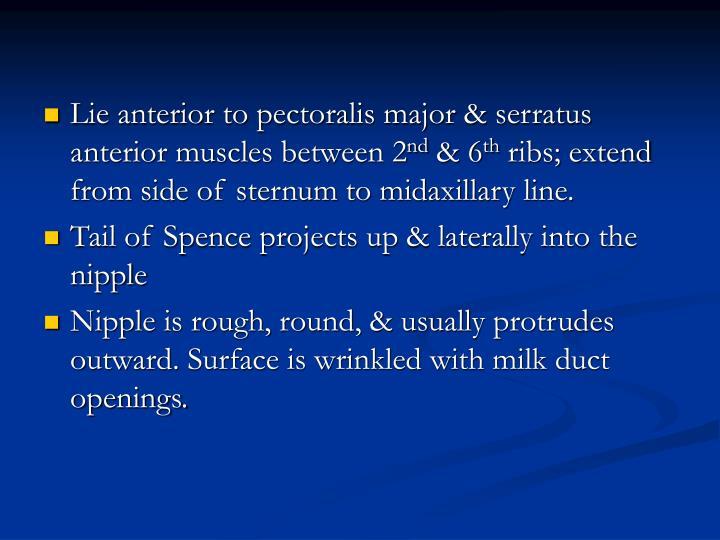 Lie anterior to pectoralis major & serratus anterior muscles between 2