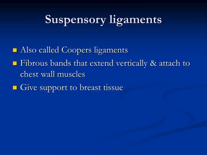 Suspensory ligaments