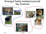 diverged family members provide key features