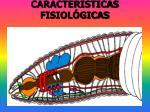 caracter sticas fisiol gicas
