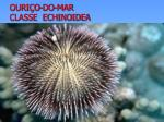 ouri o do mar classe echinoidea