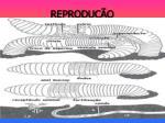 reprodu o1