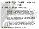 how did elijah end up under the tree1