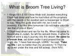 what is broom tree living