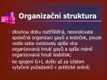 organiza n struktura1