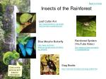 insects of the rainforest