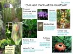 trees and plants of the rainforest