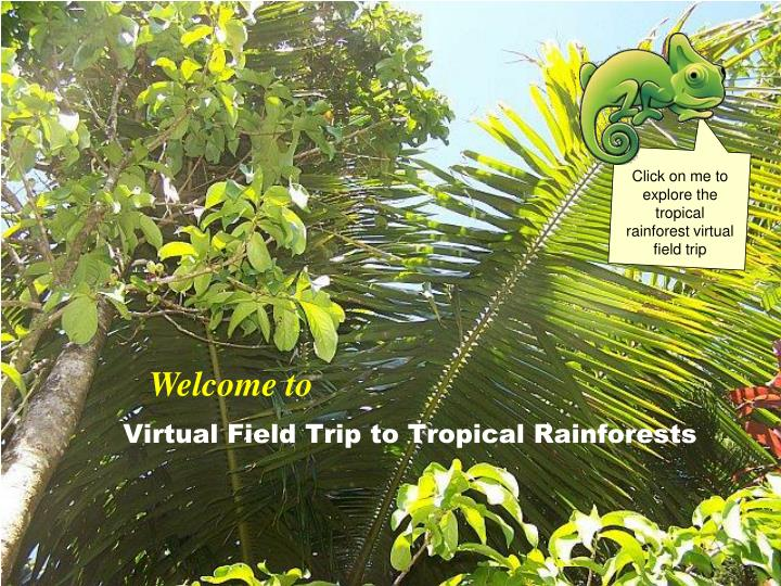 virtual field trip to tropical rainforests n.