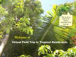 virtual field trip to tropical rainforests
