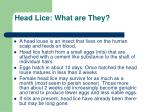 head lice what are they