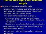 uterine wall layers and vascular supply