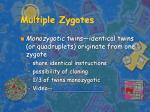 multiple zygotes
